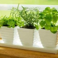 """Three Pots of Herbs in a Kitchen Window - 36""""W x 24""""H - Peel and Stick Wall Decal by Wallmonkeys"""