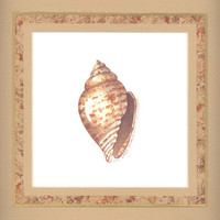 "Miter Shell 10"" x 10"" custom matted lithograph"