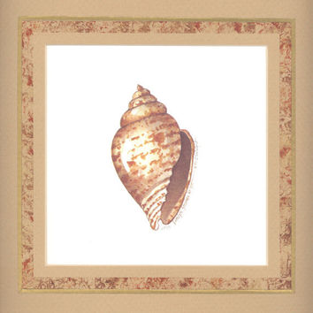 """Miter Shell 10"""" x 10"""" custom matted lithograph"""