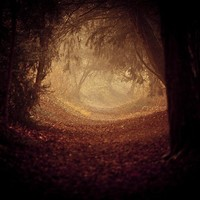 Photography sale - Fine art photography - Tree photo - Where is the white rabbit - spooky halloween magical woodland avenue - 8x8