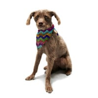 "Beth Engel ""Natural Flow"" Chevron Pet Bandana"