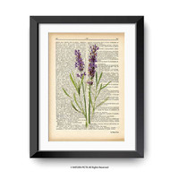 Lavender flower print-lavender flower dictionary print-lavender print-lavender on book page-botanical print-flower print-NATURA PICTA-DP148
