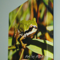 Canvas Photo Frog wildlife gift art photo canvas 8 x 10 inch canvas on a .75 width solid wood frame