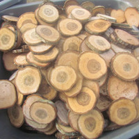 """200 Solid OAK round wood slices ranging from 2"""" to 2.5"""" diameter cut at 1/4"""" thick"""