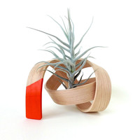 Hand-Bent Scribble Air Plant Holder in Orange