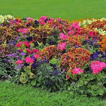 Shady Annual Pre-Seeded Flower Mat with Soil