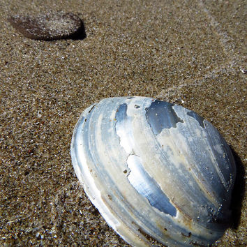 Lake Erie Mussel Shell by Shawna Rowe