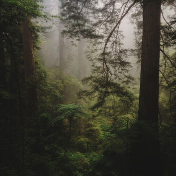 Foggy Forest Art Print by Kevin Russ