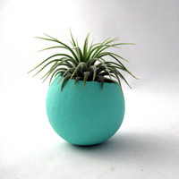 Mini Air Plant Container Pod - Blue Vessel // Home and Living // Indoor Garden // Planter