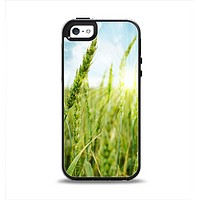 The Sunny Wheat Field Apple iPhone 5-5s Otterbox Symmetry Case Skin Set