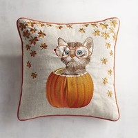 Kitten in Pumpkin Pillow