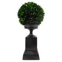 "17"" Boxwood Ball on Pedestal, Preserved, Arrangements"