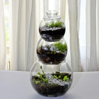 FAB 3 tier table top terrerrium with a venus fly trap by wesbenn