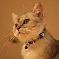 Skull and Crossbones Cat Collar