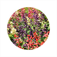 LIMITED EDITION Circle Photo, Floral Photography, Nature Photography, Salvia Flower, Colourful Flowers, Open Edition 8 x 8 Square Photo