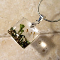 Pixie Cup Lichen (Cladonia sp.) and Moss (Dicranoweisia?)  Necklace, Moss Jewelry, Plant Jewelry, mycology, fungi, woodland, nature