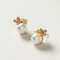 Prima Pearl Posts by Anthropologie Pearl One Size Earrings