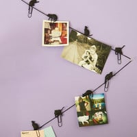 Cats Herding Cats Photo Clips by ModCloth