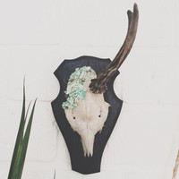 Goat skull mounted wall hanging vintage natural with horn and rough Chrysoprase crystals boho bohemian hippie gipsy summer home decor