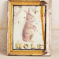 Mole By Huw Griffith