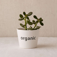 Organic Planter - Urban Outfitters
