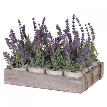 Lavenders Mini Pots x12 In Wooden Tray