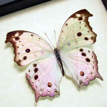 Wedding Gift Mother Of Pearl Real Framed Butterfly 200