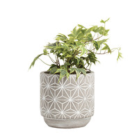 Large Star Concrete Pot
