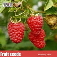 Free shipping 100pcs raspberry seeds, delicious fruit plants seeds