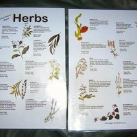 Herbs Guide at Every Witch Way Online Shop