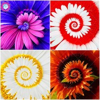 30pcs/bag Daisy seeds Rare flower seeds Perennial indoor Potted plants for home garden Four seasons flowering seeds Bonsai plant