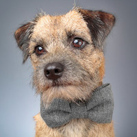 Dog Bow Tie - Chevron Tweed