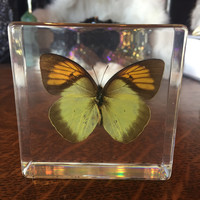Orange Tip Butterfly Paperweight