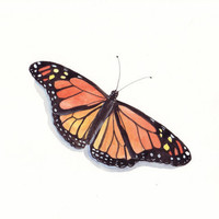 Butterfly Painting Print of watercolor painting by Splodgepodge