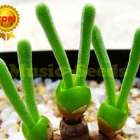 1BAG=80PCS mini tree bonsai Succulent Plant child like gift for home and garden rabbit carrot vegetable like funny free shipping
