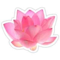 lotus by ilginschoices