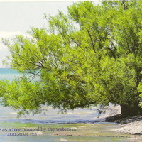 Photo Scripture Card Jeremiah 17:8 Tree at Water's Edge Blank Inside Matching Envelope Seal High Quality Glossy Stock  Suitable For Framing