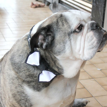 Large Size Dog Bow Tie. Black and White Puppy Bowtie. Great for Medium Dogs Large Dogs. Attaches to Dog Collar with Velcro. Dog Wedding