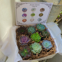 Succulent Treasures Birthday Gift Box. 9 Assorted Premium succulents with label