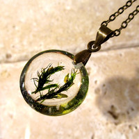 Orthotrichum sp. Necklace,  bryophyte pendant, moss, woodland, forest, plant jewelry, leaf jewellery, Vancouver, BC
