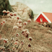 Dreamy landscape, fine art photography print, flowers and red house, Norwegian scenery, vintage inspired, nursery room decor 8x8