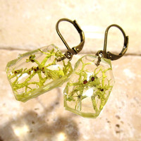 Wolf Lichen (Letharia vulpina) Earrings, Moss Jewelry, Plant Jewelry, mycology, fungi, woodland, nature, Okanagan