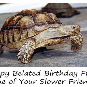 Catty Cards Greeting Cards. Thomas the Tortoise Wishes You a Happy Birthday. Slow Turtle Funny Blank Greeting Card.  Paper Goods Card