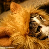 Lion Hat for Cats by Nestasnest on Etsy