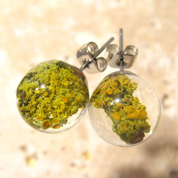Lichen (Xanthoria parienta) Earrings, Moss jewellery, Plant Jewelry, woodland, mycology, fungi