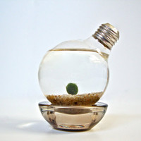 Aqua Terrarium Marimo Moss Ball Light Bulb by eGardenStudio