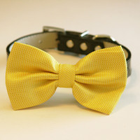 Sunny Yellow Bow Tie with high quality Black leather collar- Chic Wedding dog bow tie, Dog Bow Tie