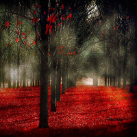 Woodland Photograph Autumn Forest Trees Spooky by Raceytay on Etsy
