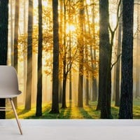 Breaking Sun Forest Wallpaper Wall Mural | MuralsWallpaper.co.uk