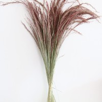 "Dried Silk Grass in Pink - 2oz Bunch - 24-28"" Tall"